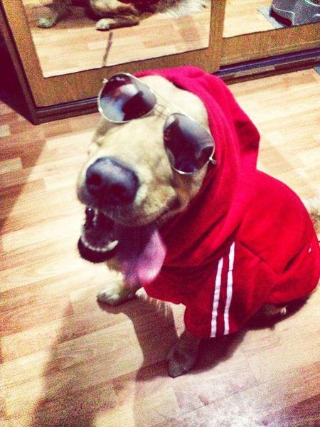 #dog #ilovemydog #trendingdog #stylishdog #fashion