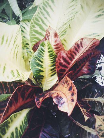 Color Portrait Nature