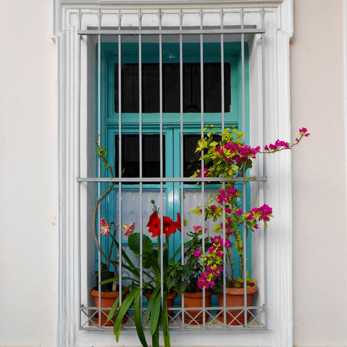 A artistic window Atene Athens, Greece GRECIA. ELLAS Grecia Grecian Green Color Architecture Atene, Grecia Athens Beauty In Nature Day Flower Flower Pot Flowering Plant Fragility Freshness Glass Nature Outdoors Plant Streetphotography Vulnerability  Window Window Frame
