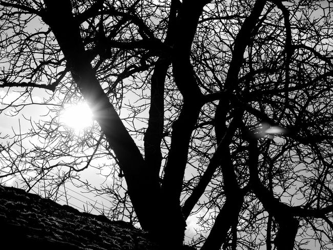 Arty BIG Black & White Branches Tree Baw Beauty In Nature Beauty In Nature Black And White Blackandwhite Branch Branches And Sky Bw Day Low Angle View Nature No People Old Outdoors Silhouette Sky Sun Sunlight Tranquility Tree