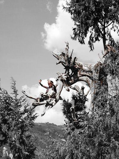 Hello.... Tree