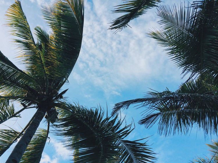 Patiently waiting for Mr. Sun to show up 😊 Philippines Blue Sky Palm Trees Bantayan Island
