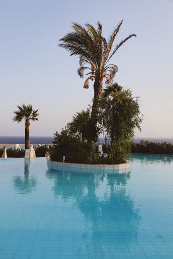 Palm trees in swimming pool