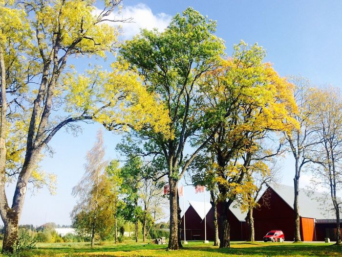 EyeEmNewHere Tree Day Nature Tranquility No People Outdoors Sky Branch Architecture Beauty In Nature Built Structure Building Exterior Grass The Week On EyeEm Laphotographiebleue Scandinavianphoto Vandalorum Värnamo Sweden Värnamo Artgallery Architecture Fall Beauty