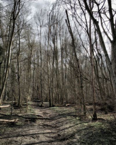 Out for a walk today, things starting to brighten up Taking Photos Woodland Walks WelwynGardenCity Commonswood Walking Around HDR Winter