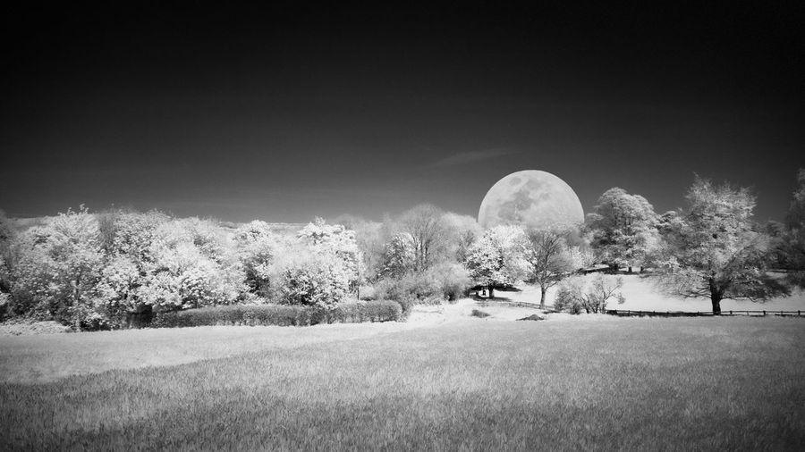 Digital composite image of trees on field against sky