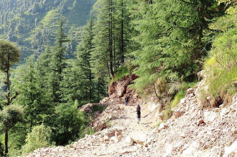 trekking through a tough terrain Landslide Jungle Trekking Jungle Trail Pine Woodland Himalayas Daytime Canonphotography Tree Sunlight Green Color Calm Growing Young Plant Scenics Woods Tranquility Tranquil Scene The Great Outdoors - 2018 EyeEm Awards The Photojournalist - 2018 EyeEm Awards The Traveler - 2018 EyeEm Awards