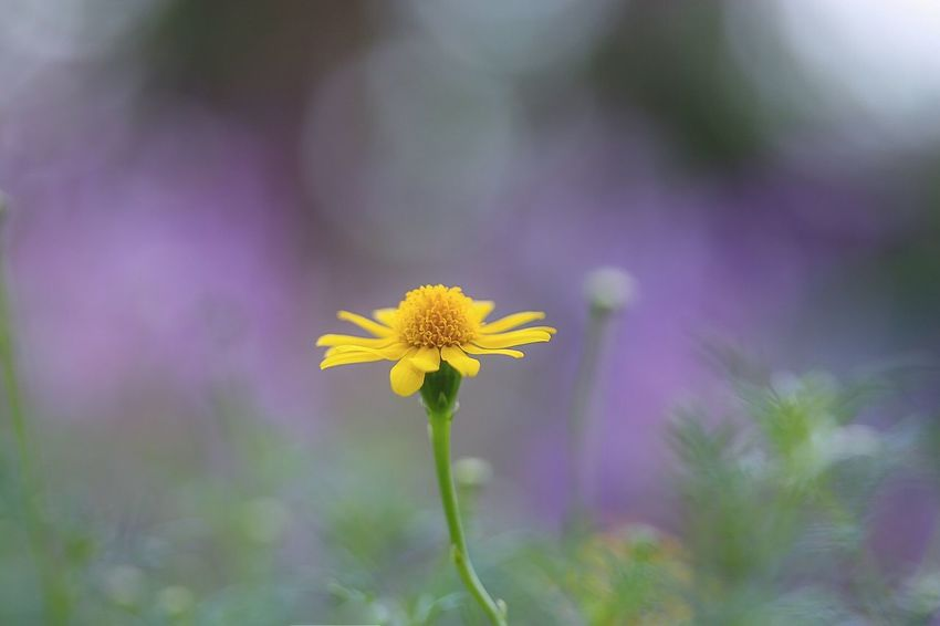 I'm alone, but not lonely Macro Nature EyeEm Nature Lover Still Life Small Flowers Flowerlovers Bokeh Shiny Lifeisbeautiful Light And Shadow Focus On Macro Beauty Getting Inspired EyeEm Gallery ひとりだけど、ひとりじゃない。ひとりじゃないけど、ひとり。
