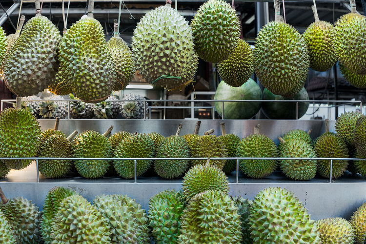 Fresh Asian Durian on hanging on display for sale at a vendors street stall. Durian Hanging Abundance Beauty In Nature Cactus Day Food Food And Drink Freshness Fruit Growth Hanging Healthy Eating Large Group Of Objects Market Stall Nature No People Outdoors Plant Smelly Fruit Spikey Supermarket Sweet Food