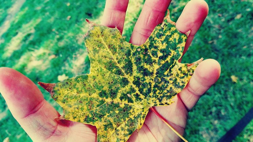 Holding Focus On Foreground Green Color Human Finger Green Autumn Leaves Leaves Autumn🍁🍁🍁 Hello Autumn Autumn Is Coming Autumn Is Here 🍂🍁 Autumn 2016 Look What I Found From My Point Of View Tranquility Bokeh Hello Autumn ...am Back With Wow Showcase September September