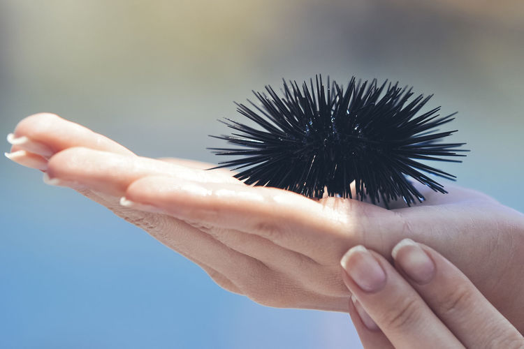 Cropped hand holding sea urchin