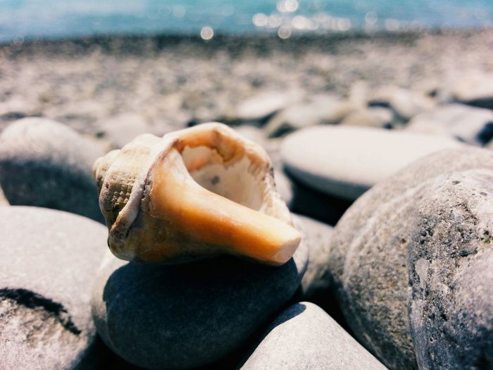 Shell Sochi Beach Sand Sea Water No People Outdoors Day Close-up Nature Blacksea
