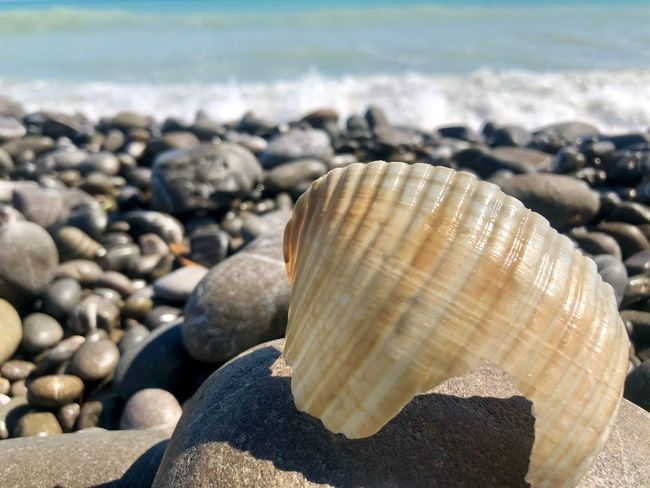 Autumn? Beach Land Nature Rock Shell Sea Solid Sunlight Day Stone - Object Close-up Focus On Foreground No People Beauty In Nature Pebble Stone Animal Shell Water Rock - Object Animal Wildlife