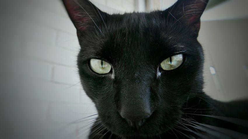 Cats Cat Animals Animal Photography Black And White Photography Fury Glance Panasonic Lx100 Gaze Cat Eyes Pet Portraits