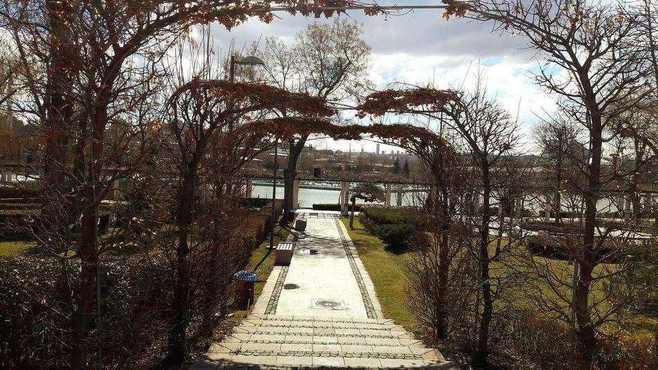 No People Outdoors Tree Kış Biter Dallar Altında Genclik Parki Gençlikparkı Gençlik Parkı Tiyatroya Ankara/turkey Break The Mold The Street Photographer - 2017 EyeEm Awards