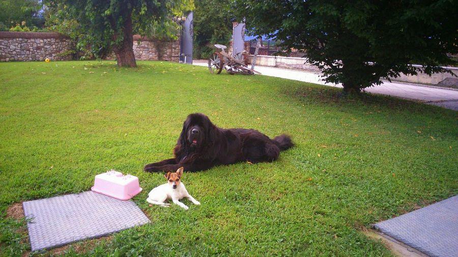Taking Photos Newfoundland Dog Dogslife Rocky&Leo TERRANOVASTYLE Relaxing Beautiful ♥ MyLove❤
