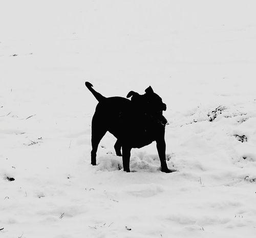 Snow ❄ Dog Snow Day!