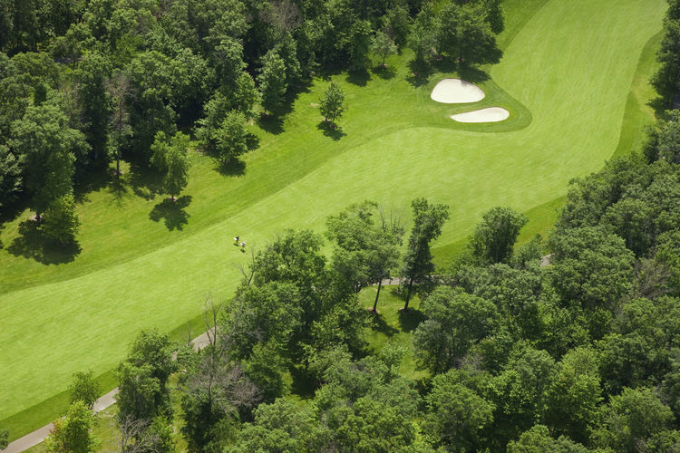 Aerial angle view of trees on golf course