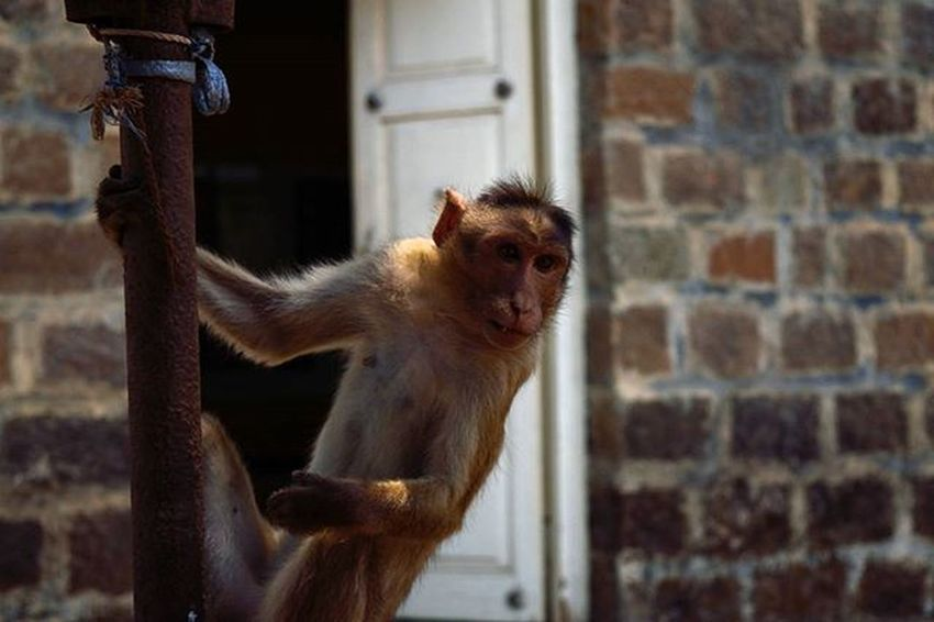 Travel Streetphotography Explore Sgnp Wildlife Animallove Animal Monkey Reminds Me Mumbairailway STAND BytheDoor Togetfresh Air