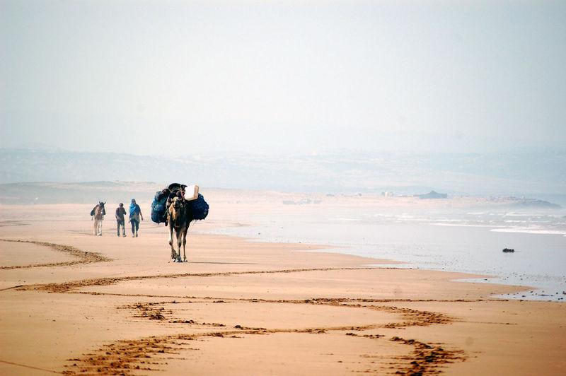 Camel Carrying Luggage Enjoying On Beach