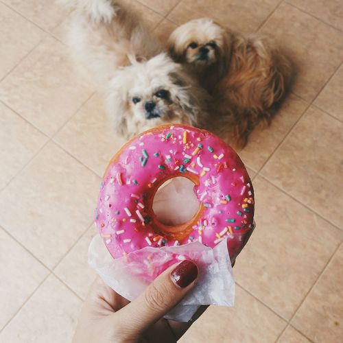 Happy Chinese New Year's Eve from me and my loves👌 Dessert Food Getting Inspired Desserts Photography Foodie Foodphotography Foodporn Dessert Porn Sweettreat Art Color Portrait Getting Creative Doughnut Donut Puppy Dog Pets Shihtzu Puppies