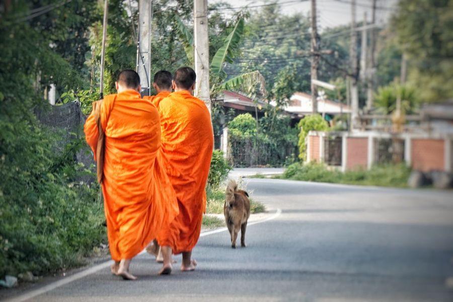 Monks Ecclesiastic Rear View Real People Mammal Men Tree Vertebrate