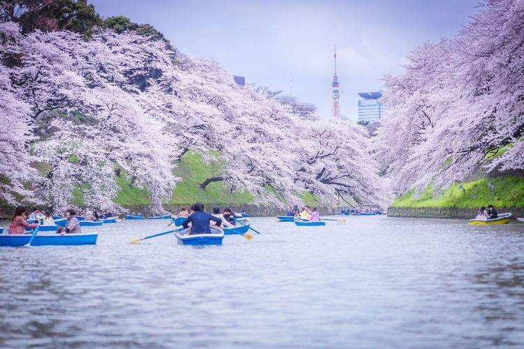 Urban Spring Fever Sakura Spring Boat at the boat First Eyeem Photo