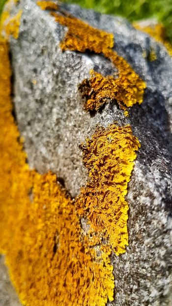 Lichen Lichen On Rock Lichen On Stone Contrast Islandlife EyeEmNewHere The Week On EyeEm EyeEm Nature Lover Beauty In Nature Beauty In Strange Places Focus On Foreground 100 Shades Of Yellow Paint The Town Yellow Colonies