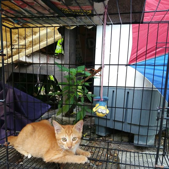 Looking At Camera Portrait Domestic Cat One Animal Pets Cage No People Day MinionsEverywhere Missionimpossible