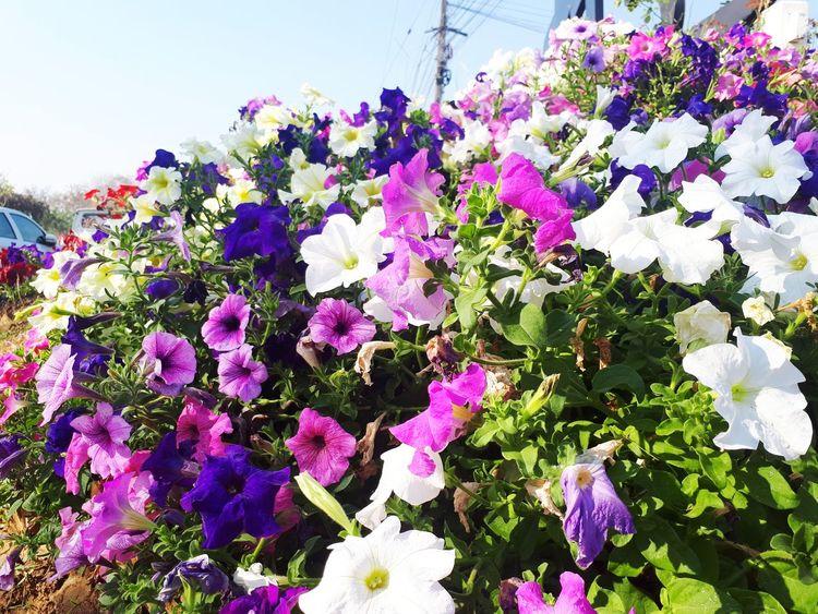 ดอกไม้ริ่มทาง