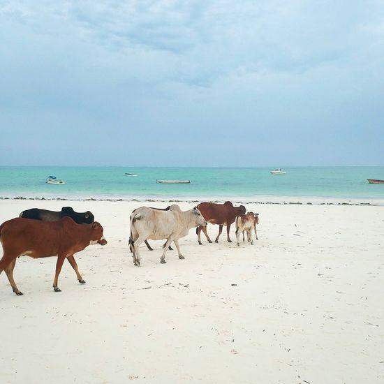 Horses on sea shore against sky