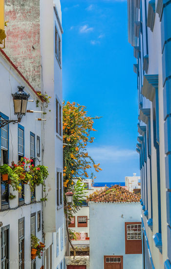 La Palma, Canarias Travel Photography Apartment Architecture Blue Building Building Exterior City Day Flower Flowering Plant Freshness Growth Holiday Destination House La Isla Bonita Nature No People Outdoors Plant Santa Cruz Sky Tree Window