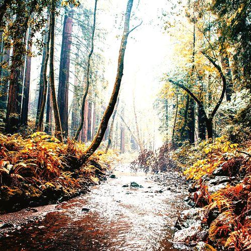 EyeEm Best Shots Heartbeat Moments Magic Hour Exploring Beautiful Nature Californiaadventures