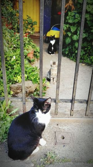 Cats 🐱 gatos