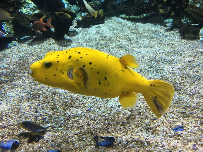 Animal Wildlife Animals In The Wild Sea Sea Life Underwater Animal Themes Animal Swimming UnderSea Water Yellow Fish