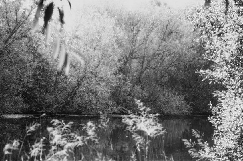A small lake with thick vegetation in Nottingham, UK, in black and white. Beauty In Nature Black & White Black And White Black And White Photography Blackandwhite Blackandwhite Photography EyeEmNewHere Lake Lake View Lakeshore Lakeside Moody Nature No People Outdoors Plant Plants Reflection Spooky Spooky Atmosphere Spooky Trees Tree Vegetation Water Water Reflections