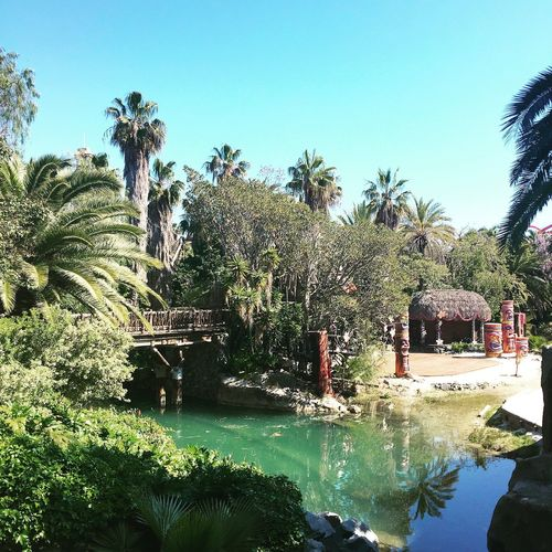 Blue Palm Tree Tree Day Clear Sky Nature No People Water Sky Tranquility Beauty In Nature Outdoors Bluewater Sun Cactus Plant SPAIN Portaventura