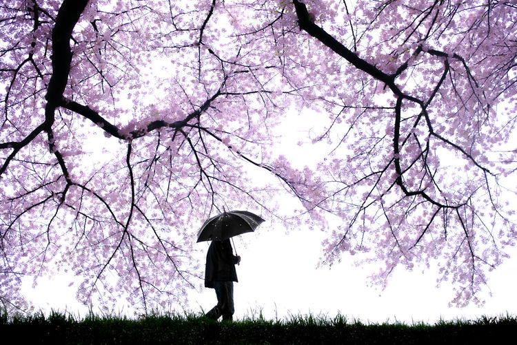 Low angle view of woman by pink tree against sky