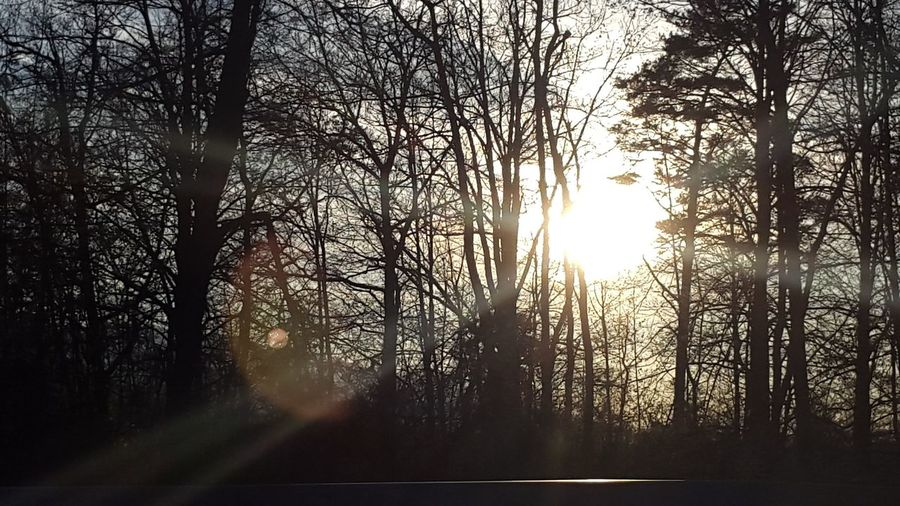 Tree Forest Sun