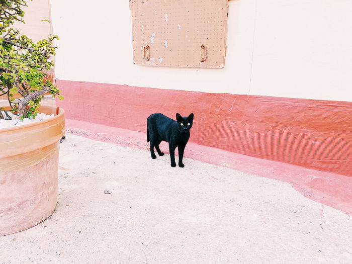 Dog standing against wall