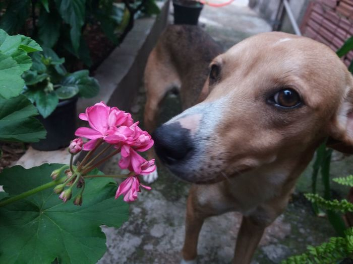 One Animal Pink Color Dog Flower Animal Themes Pets Close-up Mammal Portrait Outdoors Nature No People Day Domestic Animals 3XSPUnity 3XPSUnity DOG Dog❤ Dogs Of EyeEm Handmade For You Human Body Part Human Hand Flower Head Tree Blossom Beauty In Nature Pet Portraits