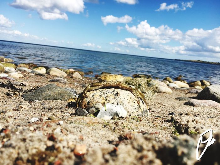 Sea Nature Water Sky Horizon Over Water Beach Sunlight Cloud - Sky Outdoors Beauty In Nature Blue Sky Crabs Deadcrap Denmark Stones Connected by Travel An Eye For Travel