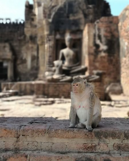 Hello monkey! Mokey Animals In The Wild Old Ruin Animal Wildlife Travel Destinations Animal Themes Day Outdoors