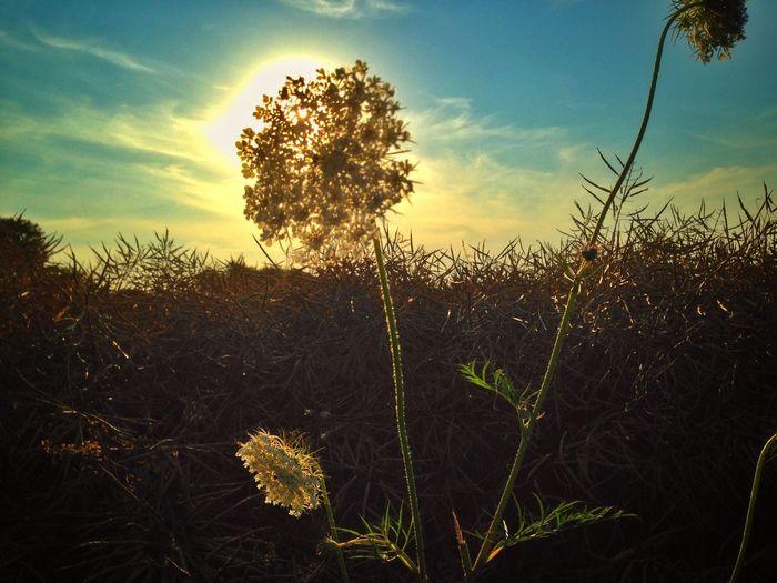 Natur Nature Tree Sky Outdoors Plant Landscape Field Sunset