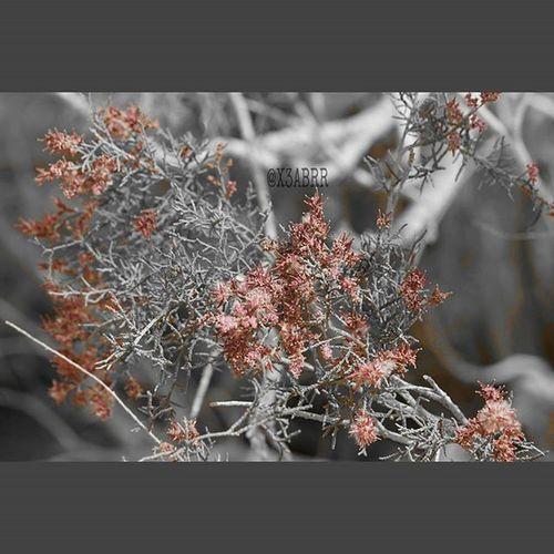 Goodmorning صباح_الخير عزل_لوني Colorsplash . flower hdr photography photographys bokeh بوكيه زهور ربيع nature
