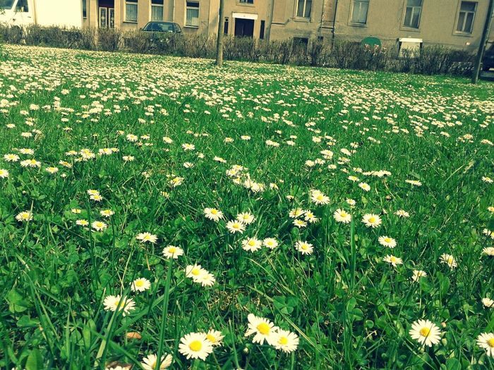 I Love Spring <3