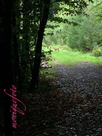 Heute beim Waldspaziergang gesehen. Leider etwas unscharf mit Handy erwischt. 🦌🦌 Monique52 Spazieren Und Fotografieren Schnappschuss Waldspaziergang Iphonephotography Rehe Schwarzwald Hochrhein