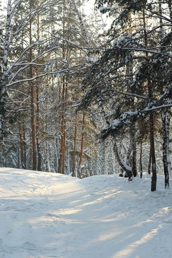 Winter Cold Temperature Snow Tree Nature Weather Beauty In Nature Forest No People Landscape Outdoors Snowing Day