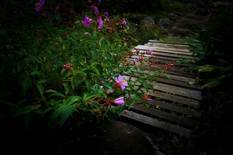 Flower Growth Nature Outdoors Beauty In Nature Bridge Wood Bridge Nature Walk Path Nature Way