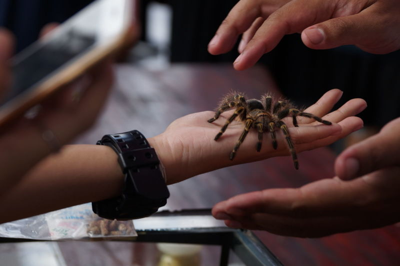 Midsection Of People Holding Tarantula